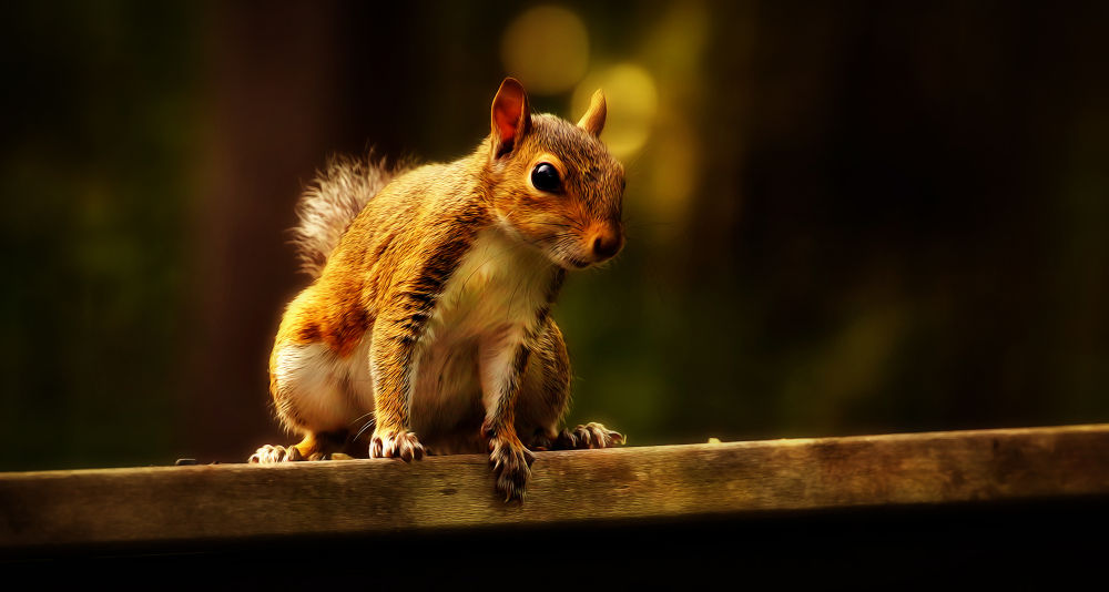 Squirrel by Ray Bilcliff
