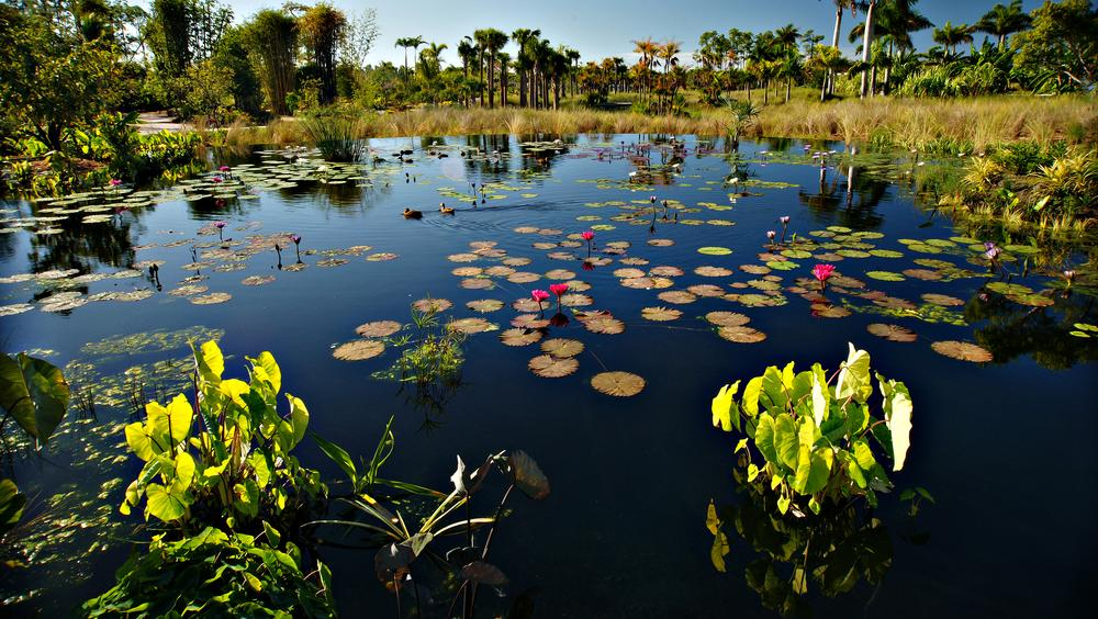 Lily Pond by Ray Bilcliff