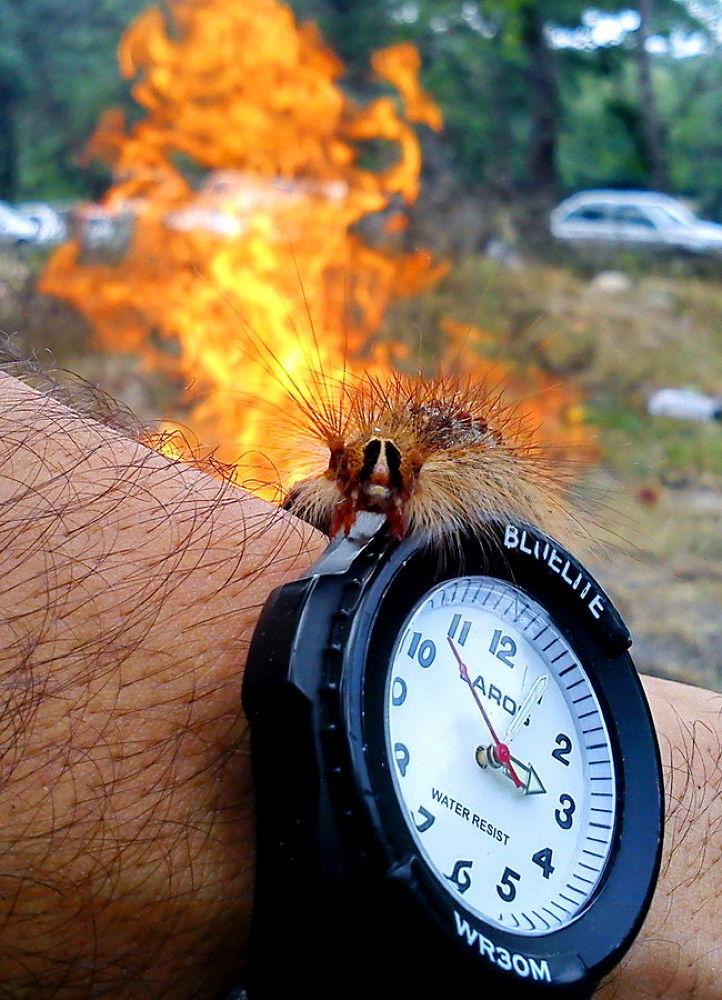 Fire Worm Watch by Vafaee