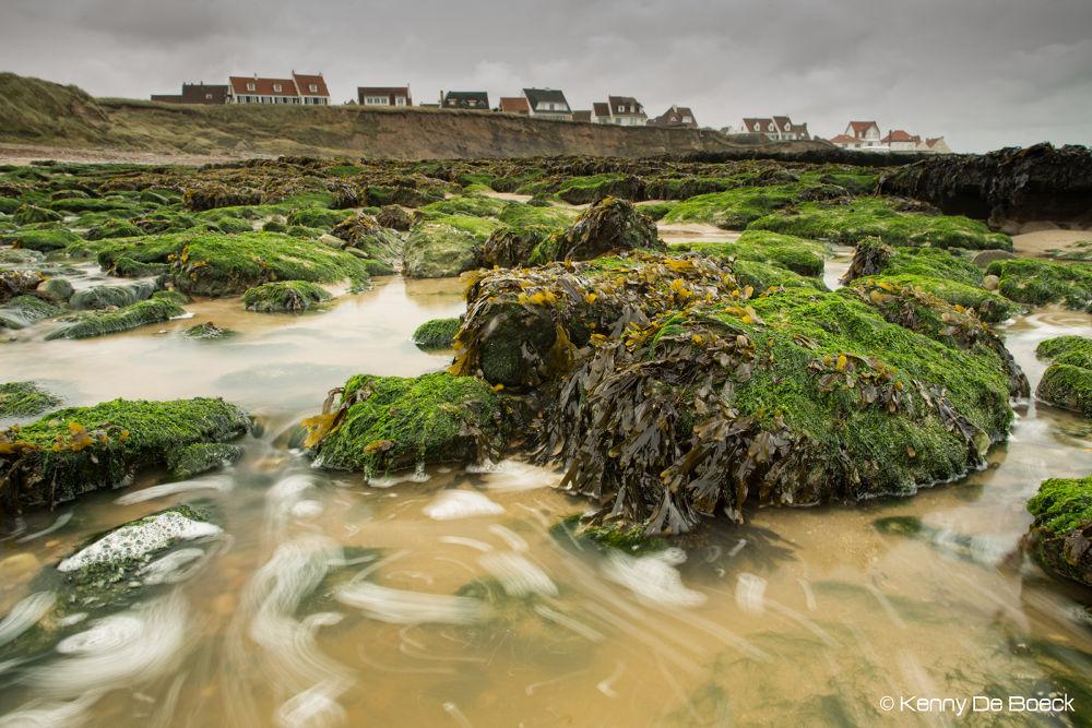 Photo in Random #seaweed #zeewier #frankrijk #france #le varech