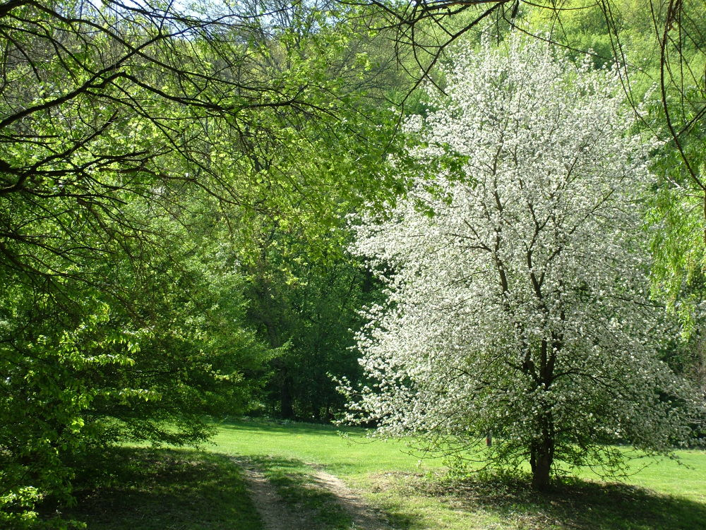Blossom by Sándor Dombora