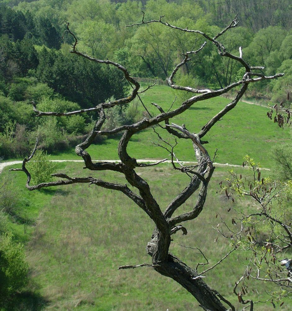 Branches by Sándor Dombora