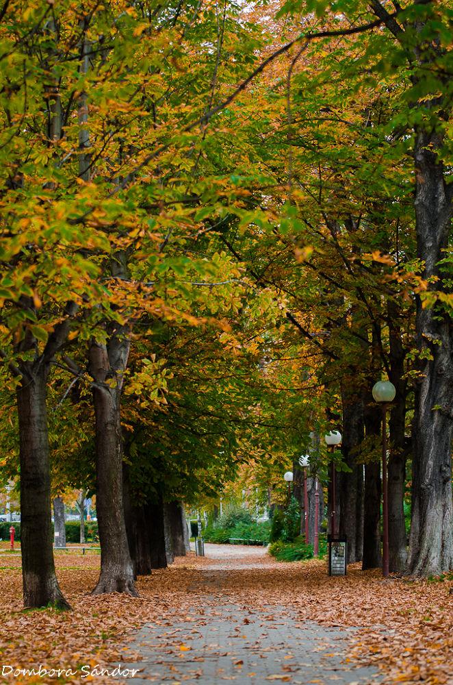Autumn in the city by Dombora Sándor
