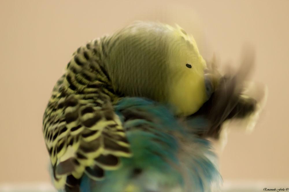 La voglia, quel giorno, volevo volare aprendo le ali, sbattendole così forte fino ad avere male ai m by hemix
