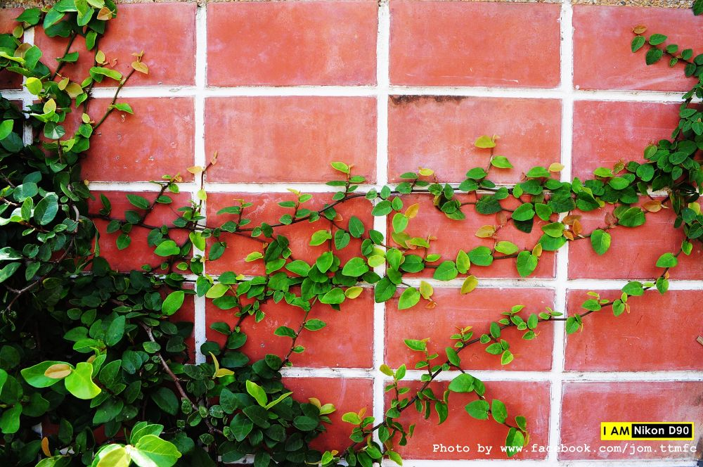 Photo in Nature #leave #wall