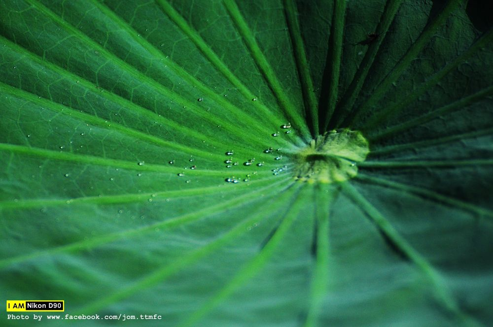 Leaves No.004 by jomttmfc