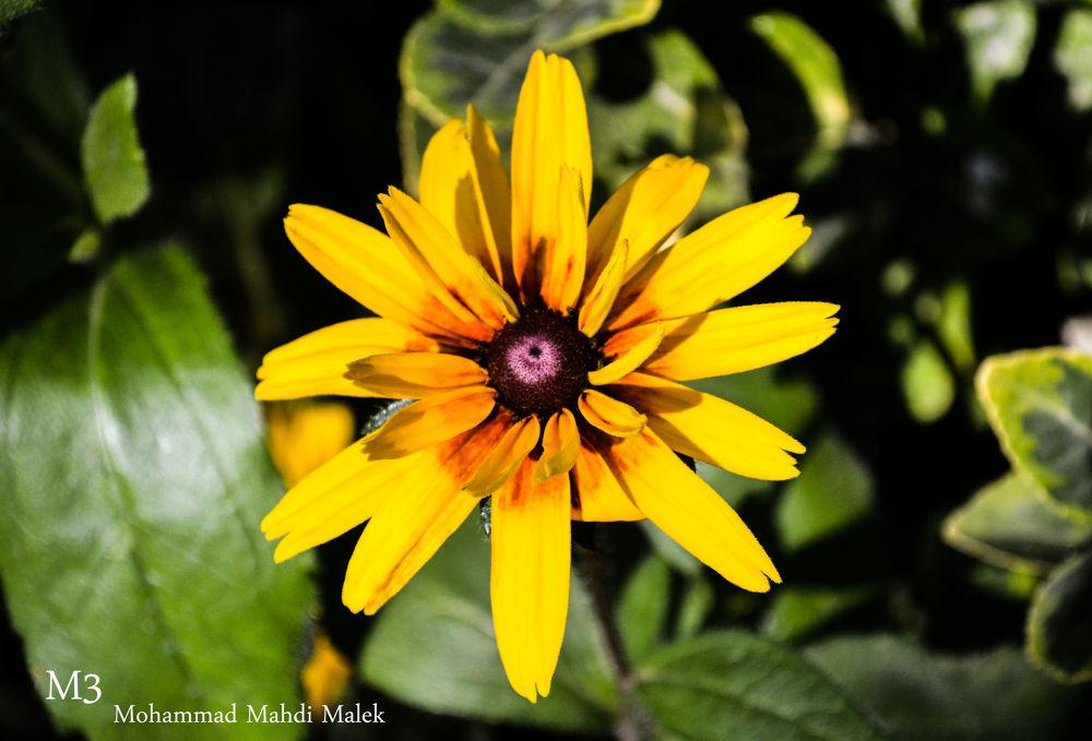 Yellow flower !!! by mohammadmahdimalek