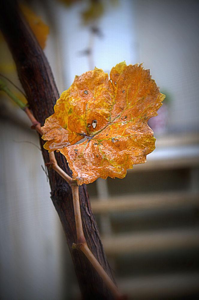 Good bye Autumn by mohammadmahdimalek