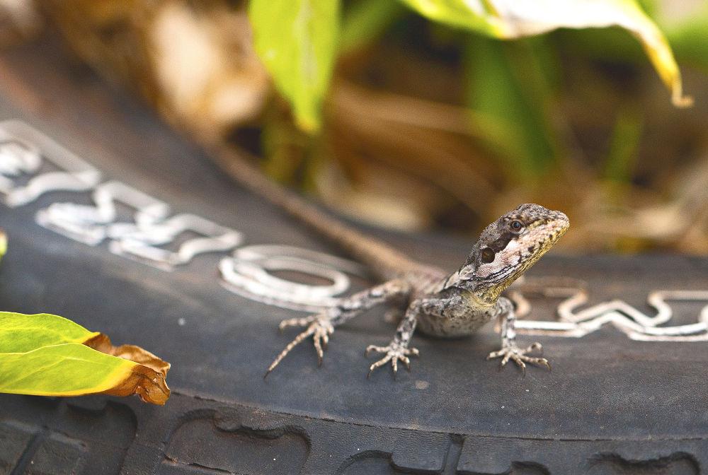 Dragon Lizard by Jamie Cain
