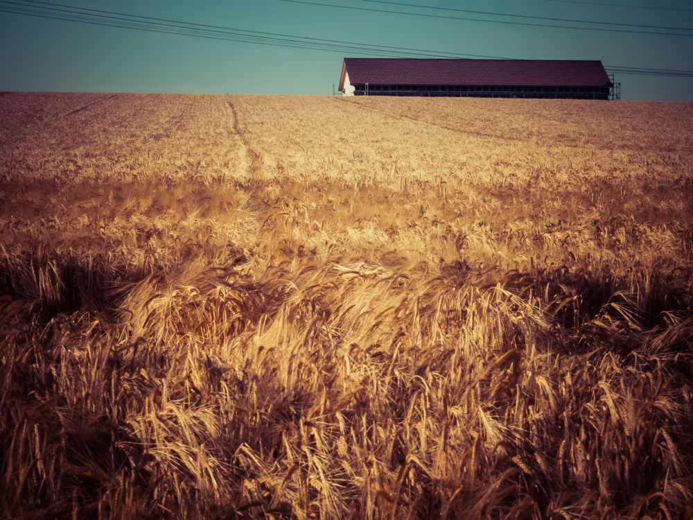 summer field by Oliver Penack