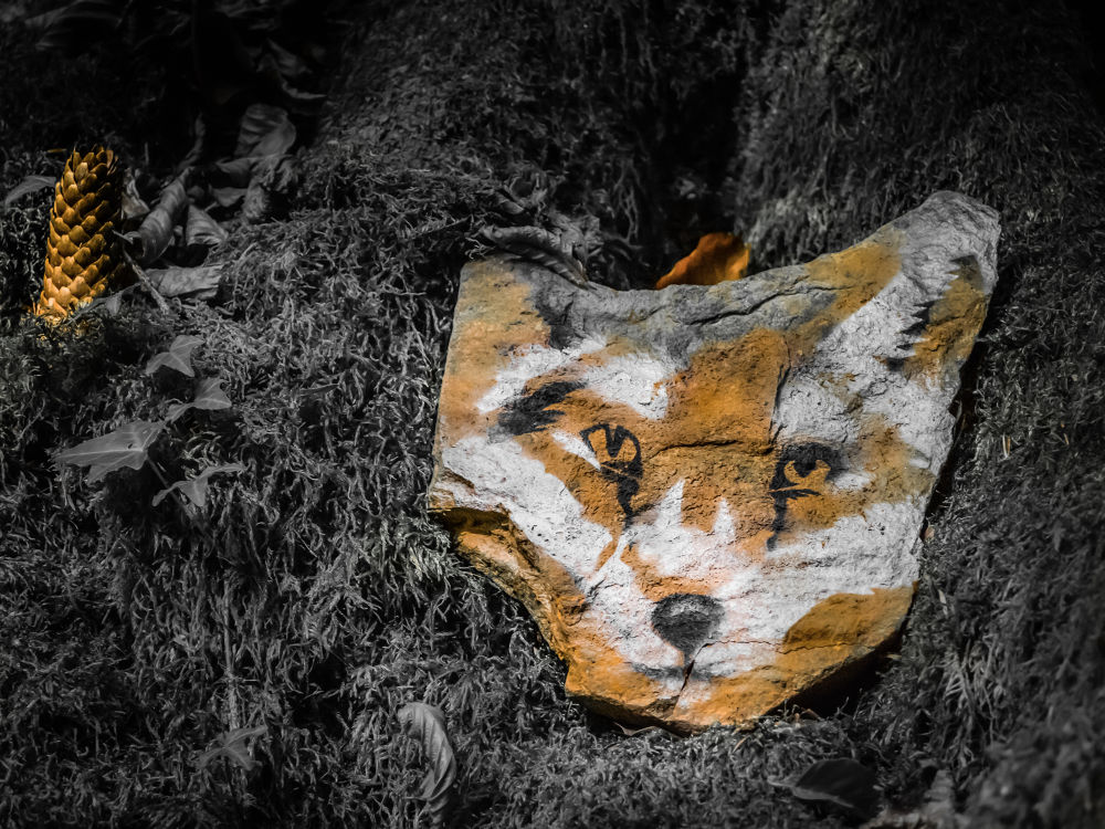 fox by Oliver Penack