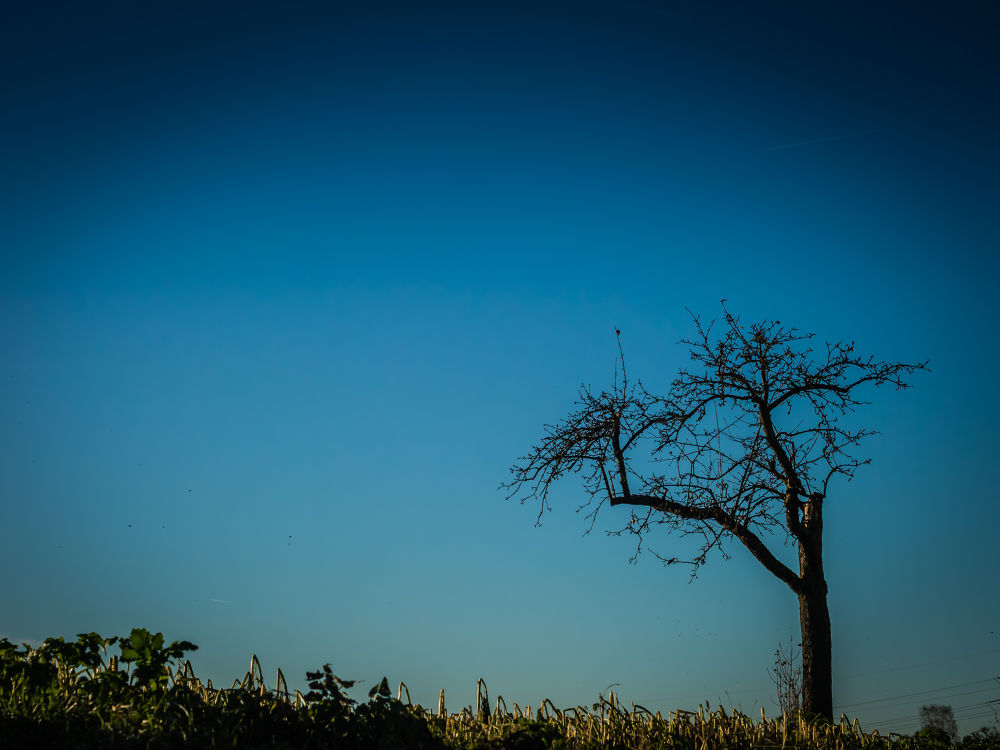 lonesome tree by Oliver Penack