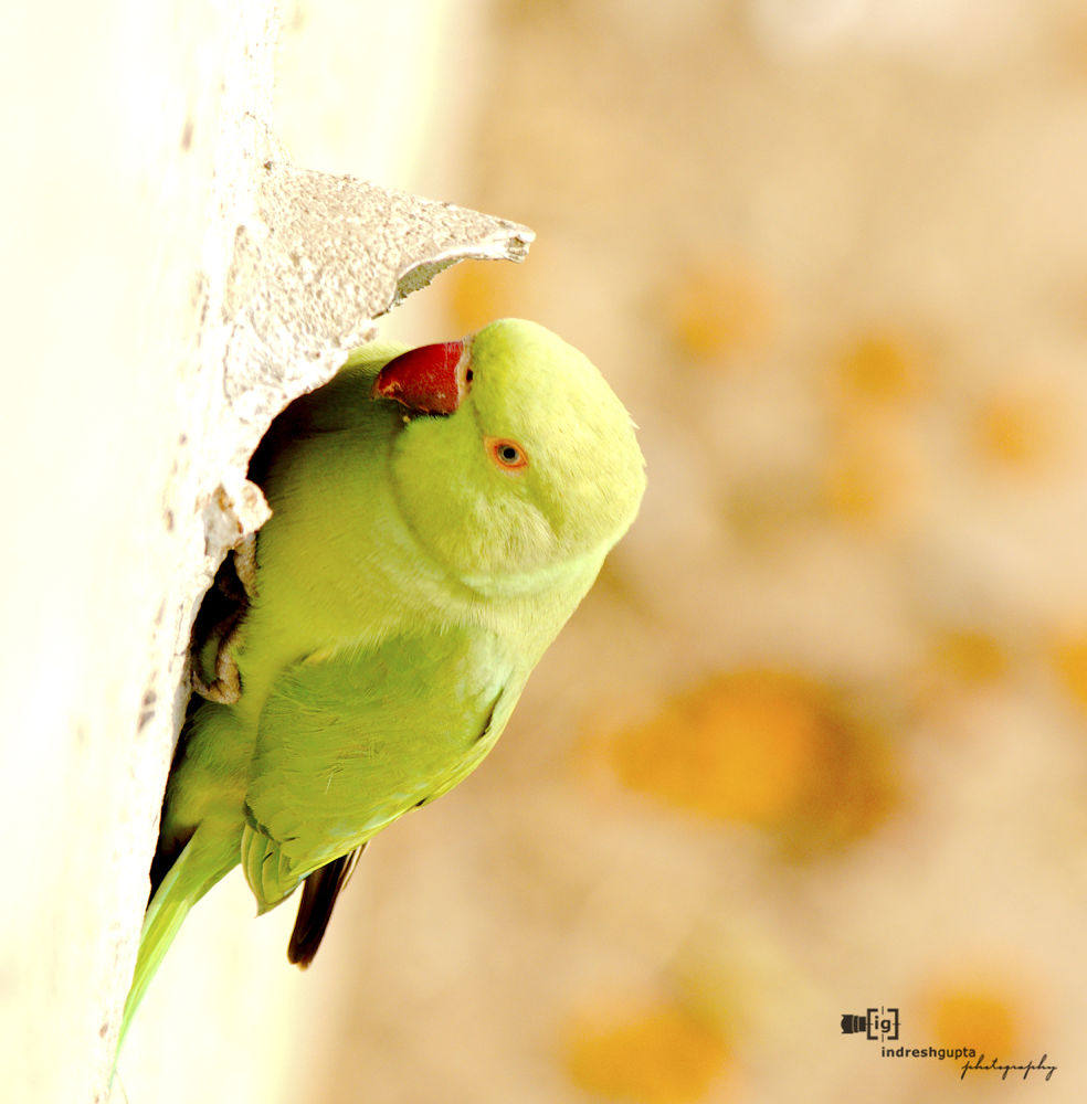 IMG_6085_1 A by Indresh Gupta