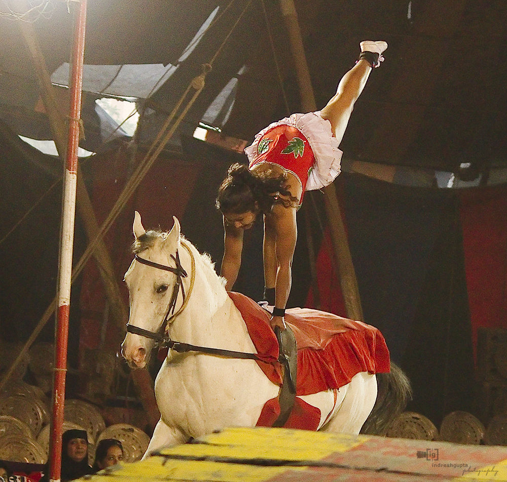 Circus_IMG_4281 A by Indresh Gupta