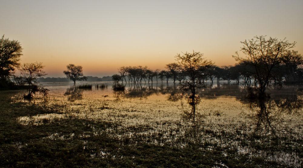 Nature IMG_4493 by Indresh Gupta
