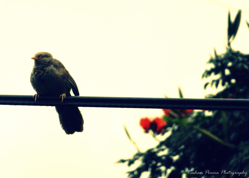 Lonely Bird by Keshan Perera