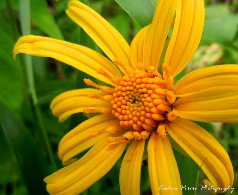 Yellow by Keshan Perera