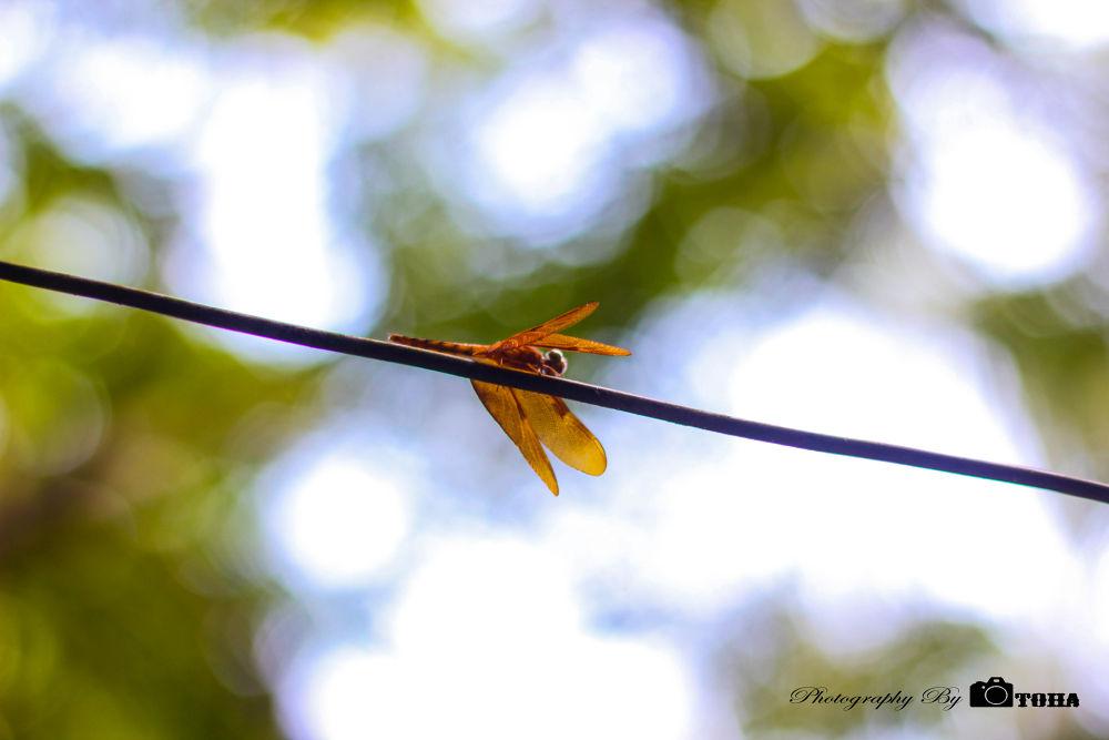 IMG_0227 by Toha_Rahman