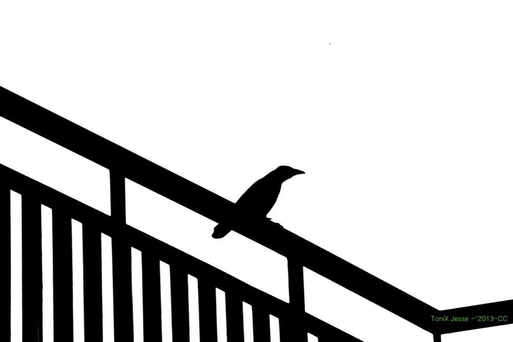 """Ambush of the Crow"" by tonixjesse"