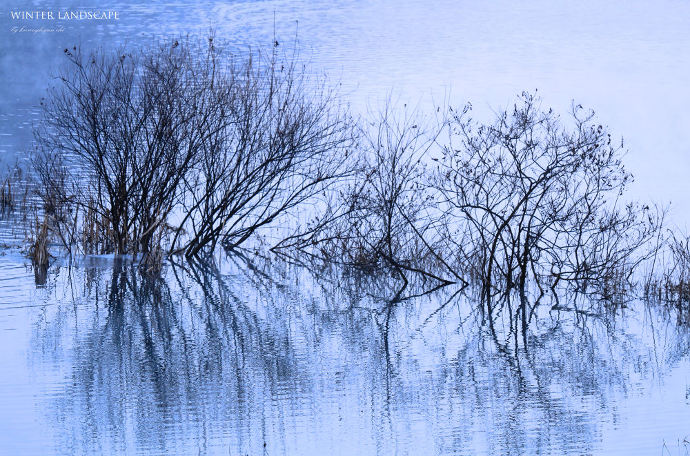 Winter Reflection  by visbimmer79