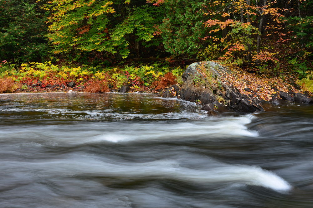 Photo in Landscape #stream #dancing stream #water #river #autumn #fall #ontario fall #canada autumn #rain #autumn drizzle #moisture #nourish #love #affection #ragged falls #fall leaves #autumn foliage #red maple