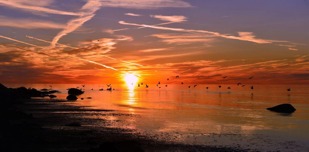 Photo in Landscape #sunrise #fiery sunrise #lake ontario #warmth #birds #canada geese #lighting #colorful #peace #ajax beauty #ontario landscape #canada charm