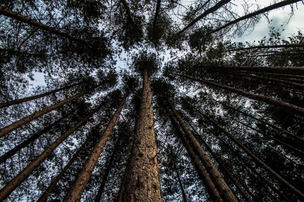 Looking Up by darrenchadwick1311