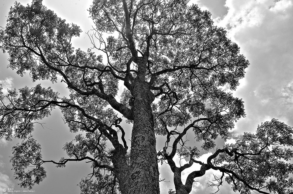 Photo in Black and White #tree #black #white #sky #cloud