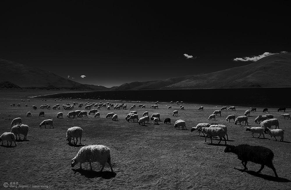 The Sheep by Jason_Meng