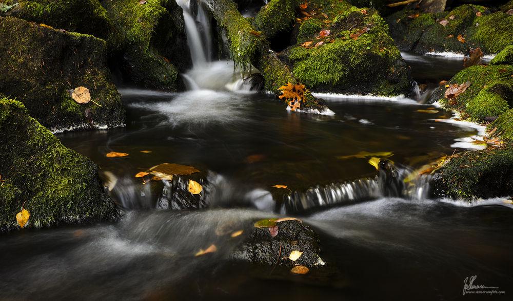 Summer leaves by jostenersen