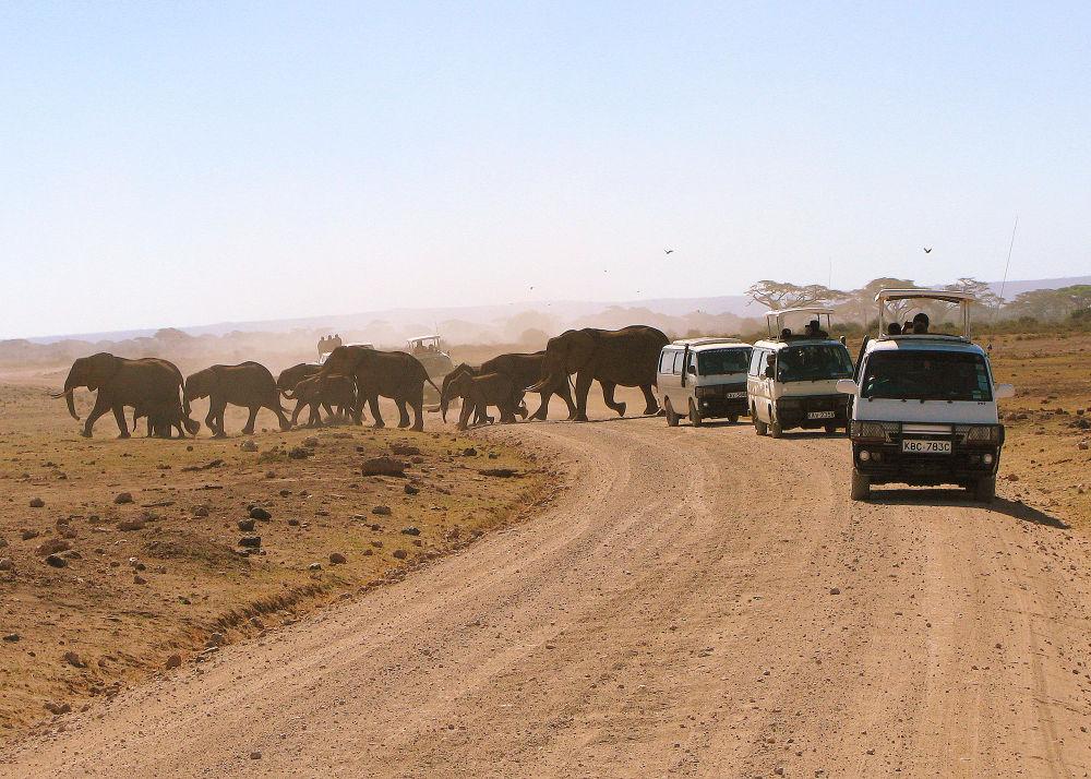 elephant crossing the road, amboseli n.p kenya by samirsarkar