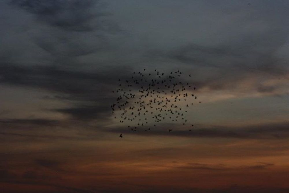 Birds in the sky by ghitaonevision