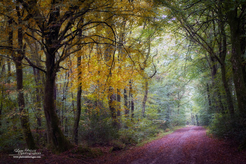 Photo in Nature #foret #nature #forest #green #autumn #bretagne #brittany #broceliande