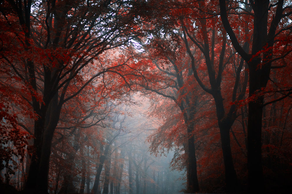 The-bloody-forest by PhilippeMANGUIN