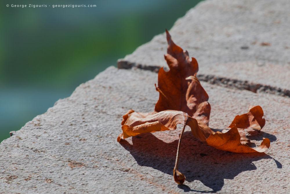 Fall by George Zigouris