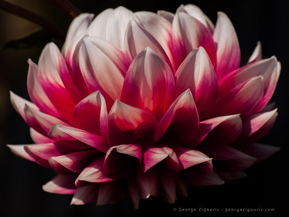 Flower by George Zigouris