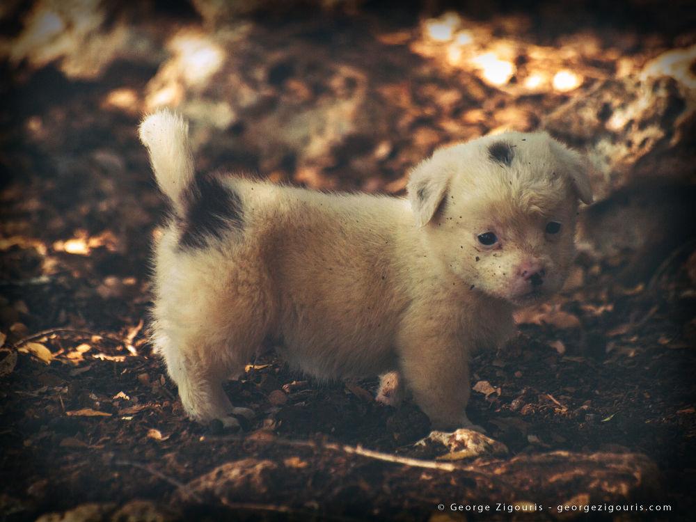 Puppy by George Zigouris