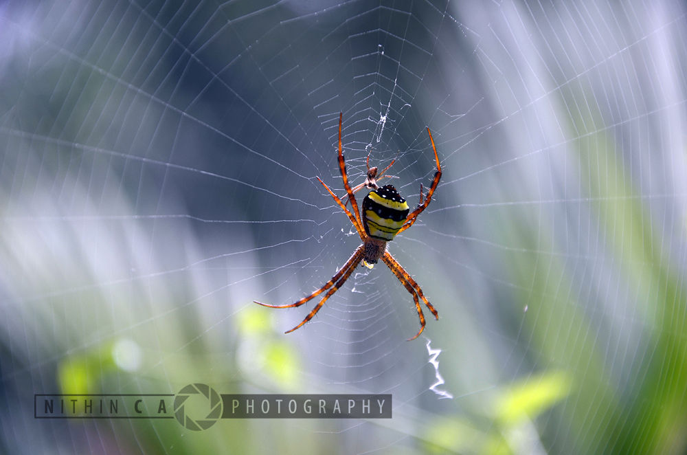spider with colours by NithinCA Photography
