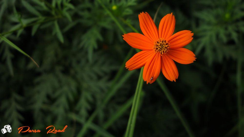 flower by parsaraad1