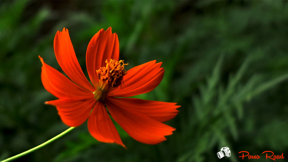 flower 3 by parsaraad1