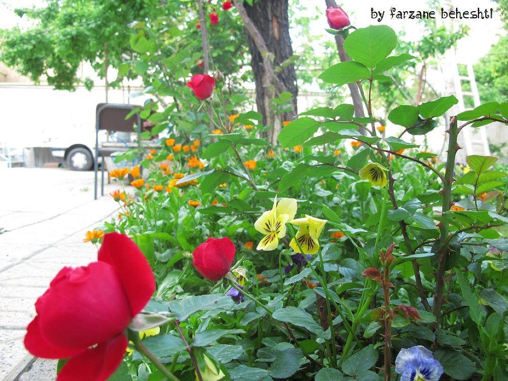 flowers near rozes by farzanebeheshti
