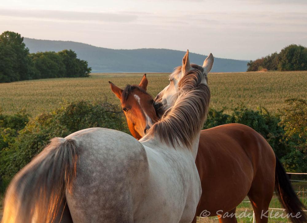 horses in love by Sandy Kleine