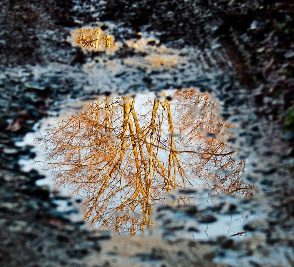 reflections by Sandy Kleine