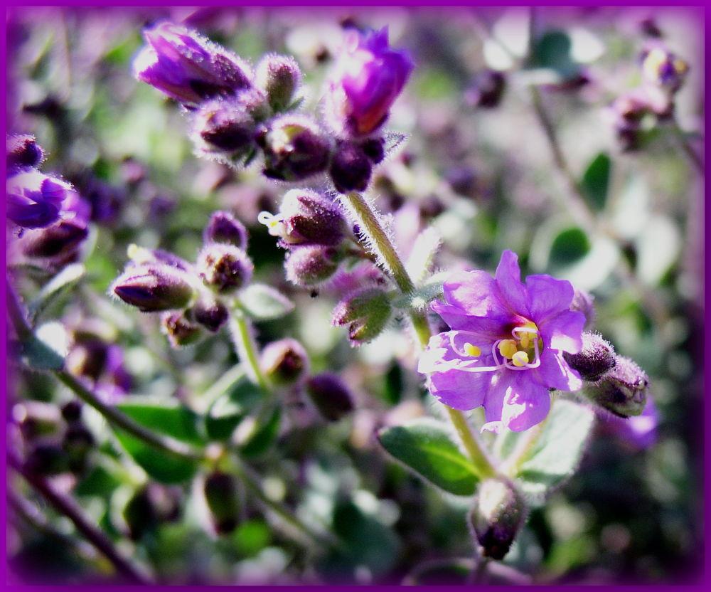 Purple slurple by Kevin Snow