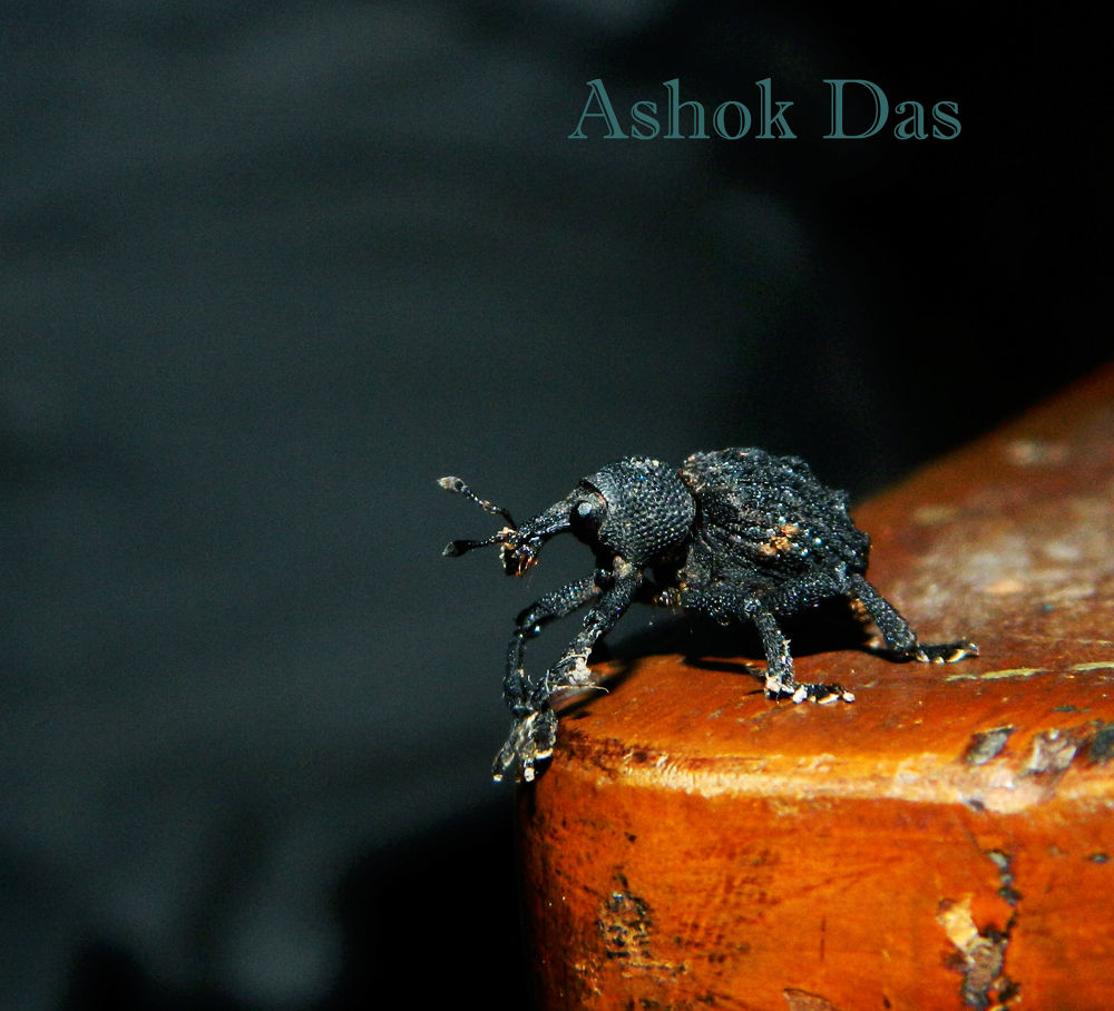 Insect by Asok Kumar Das