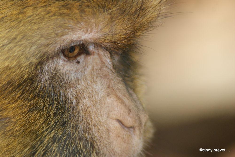 monkey by cindy