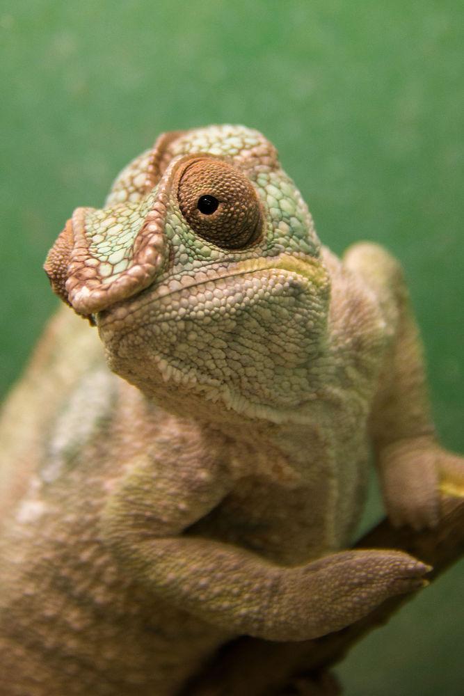 Chameleon  by Michela Botta