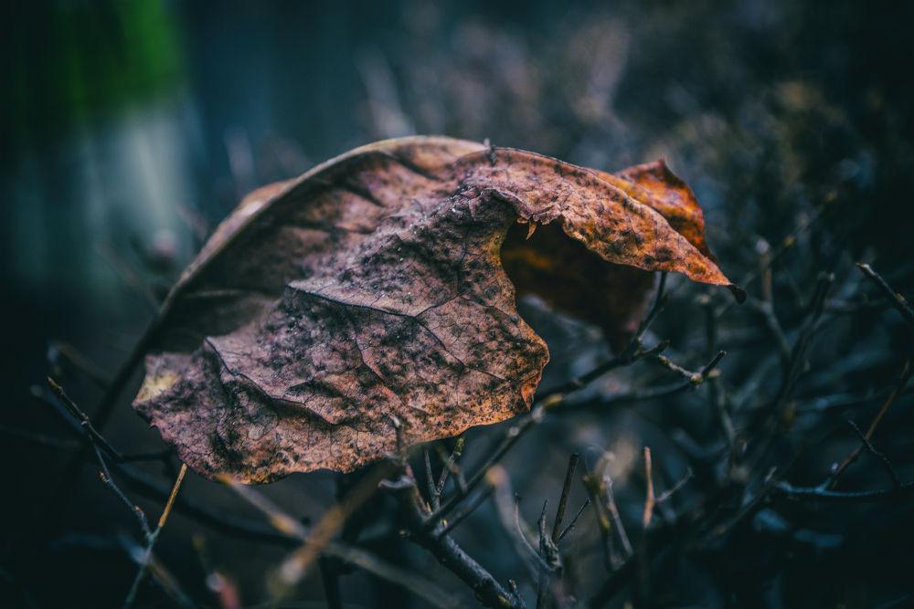 Fall by Michael Krämer