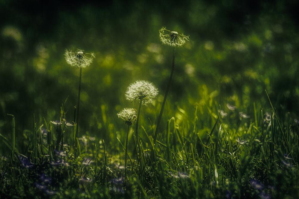 Frühlingswind by Michael Krämer