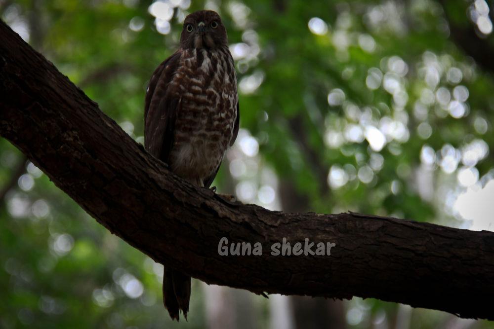 gthy_2618 by guna